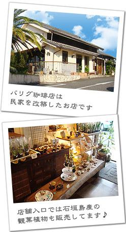バリグ珈琲は民家を改築したお店です 店舗入り口では石垣島産の観葉植物も販売しています